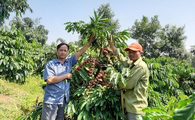 Gặp nông dân Việt Nam xuất sắc năm 2019